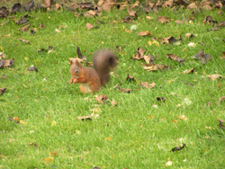 Squirrel_5_051008