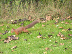 Squirrel_tail_up_051008